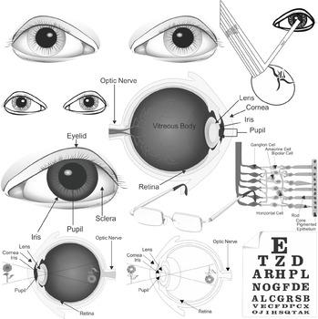 Sense of Sight Clip Art