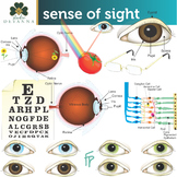 Sense of Sight Clip Art