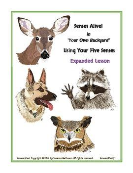 Senses Alive!  Using Your Five Senses  Expanded Lesson