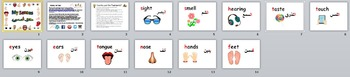 Five Senses Flashcards English and Arabic