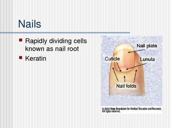 Senses & Integumentary System PowerPoint