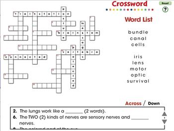 Senses, Nervous & Respiratory Systems: Crossword - MAC Gr. 3-8