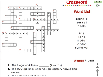 Senses, Nervous & Respiratory Systems: Crossword - NOTEBOOK Gr. 3-8
