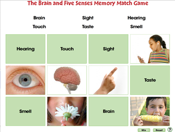 Senses, Nervous & Respiratory Systems: Memory Match Game - MAC Gr. 3-8