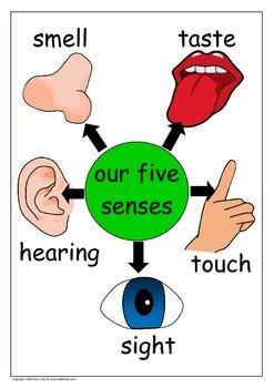 Senses Posters