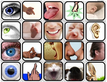 """""""Senses"""" Sorting/Matching/Flashcards for Autism"""