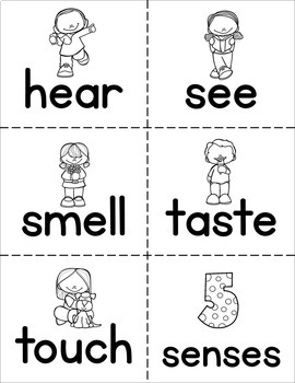 Senses and Body Parts Word Wall Flash Cards