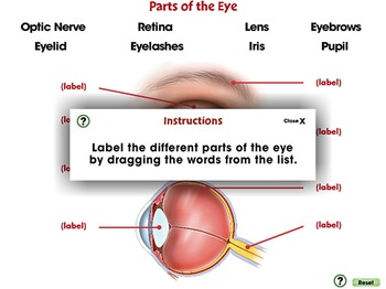Senses,Nervous & Respiratory Systems: Parts of the Eye - PC Gr. 3-8