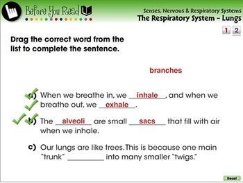 Senses,Nervous & Respiratory Systems: The Respiratory System - Lungs- PC Gr. 3-8