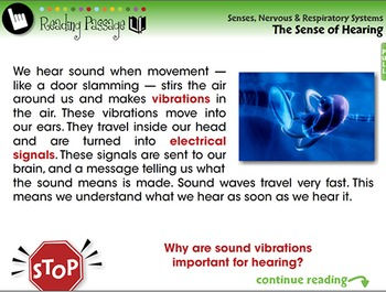Senses,Nervous & Respiratory Systems: The Sense of Hearing - PC Gr. 3-8