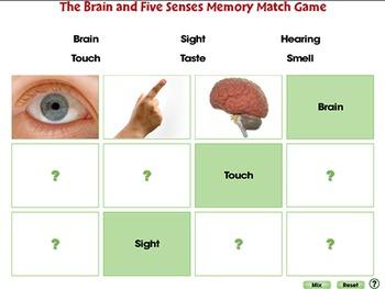 Senses,Nervous & Respiratory Systems: The Senses of Taste and Smell - PC Gr. 3-8
