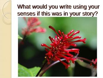 Sensory Language - Imagery