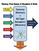 Sensory Receptors and Memories: Next Generation Science MS-LS1-8