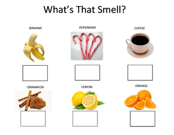 "Sensory ""smell"" Worksheet/Lesson Plan"