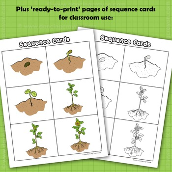 Sequence of Events Clip Art: Seed Growing to Flower