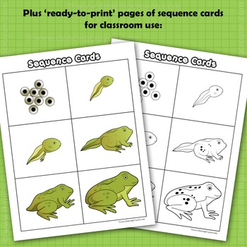 Sequence Life Cycle Clip Art: Tadpole to Frog