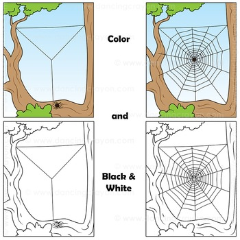 Sequence Cards and Clip Art: Spider Spinning a Web