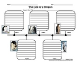 Sequence Timeline for the Life of a Penguin