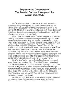 Sequence and Consequence: The Jeweled Cockroach Wasp and the African Cockroach