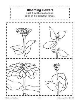Sequencing: Blooming Flowers