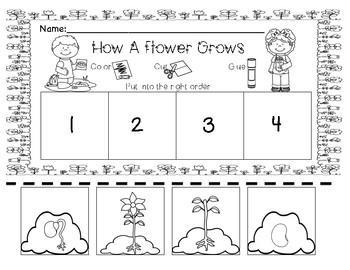 Flower-Life Cycle