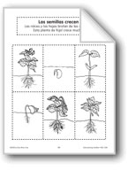 Sequencing: Seeds Grow