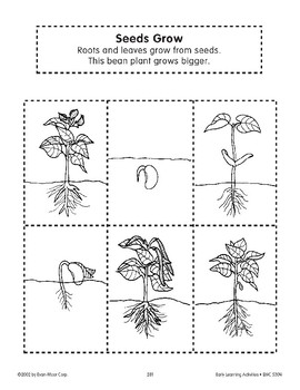 Sequencing: Seeds Grow