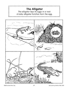 Sequencing: The Alligator