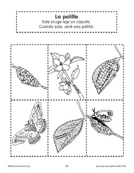 Sequencing: The Moth