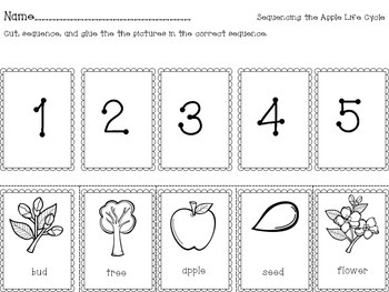 Sequencing the Apple Life Cycle