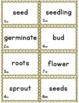 Sequencing with Sunflower Life Cycle Card Game