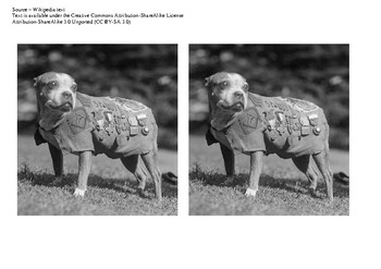 Sergeant Stubby Comic Strip and Storyboard