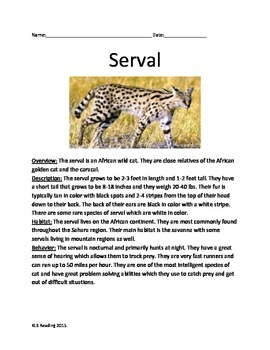 Serval Wild Cat - Informational Article Review Facts Questions Vocabulary