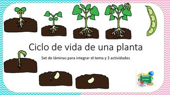 Set de láminas sobre el ciclo de vida de la planta