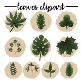 Set of 70 Seasonal Leaves Clipart
