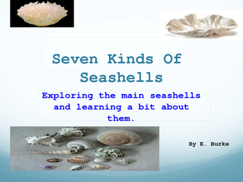 Seven Kinds Of Seashells