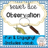 Observation Activity Sewer Lice