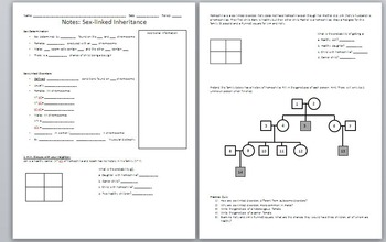 Sex-Linked Inheritance PowerPoint and Worksheet