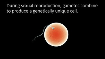 Sexual Reproduction Meiosis Science PowerPoint & Worksheets