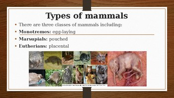 Sexual Reproduction in Mammals
