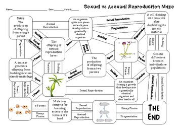 Sexual and Asexual Reproduction Maze