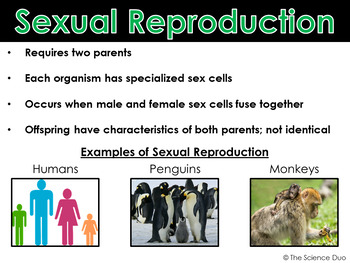 Sexual and Asexual Reproduction - PowerPoint and Notes