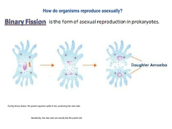 Sexual and Asexual Reproduction Unit 6 Lesson 3