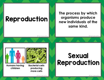 Sexual and Asexual Reproduction Vocabulary Sort
