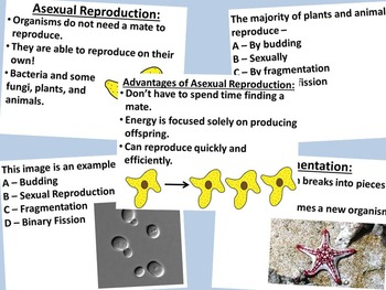 sexual vs asexual reproduction by science station tpt. Black Bedroom Furniture Sets. Home Design Ideas