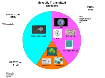 Sexually Transmitted Diseases HIV/AIDS PowerPoint Presentation Lesson