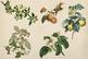 Shabby Fruits & Plants Clipart
