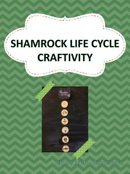 Shamrock Life Cycle Craftivity