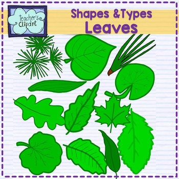 Shapes and kinds of leaves