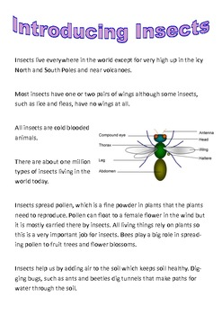 Shared Reading  - Introducing Insects